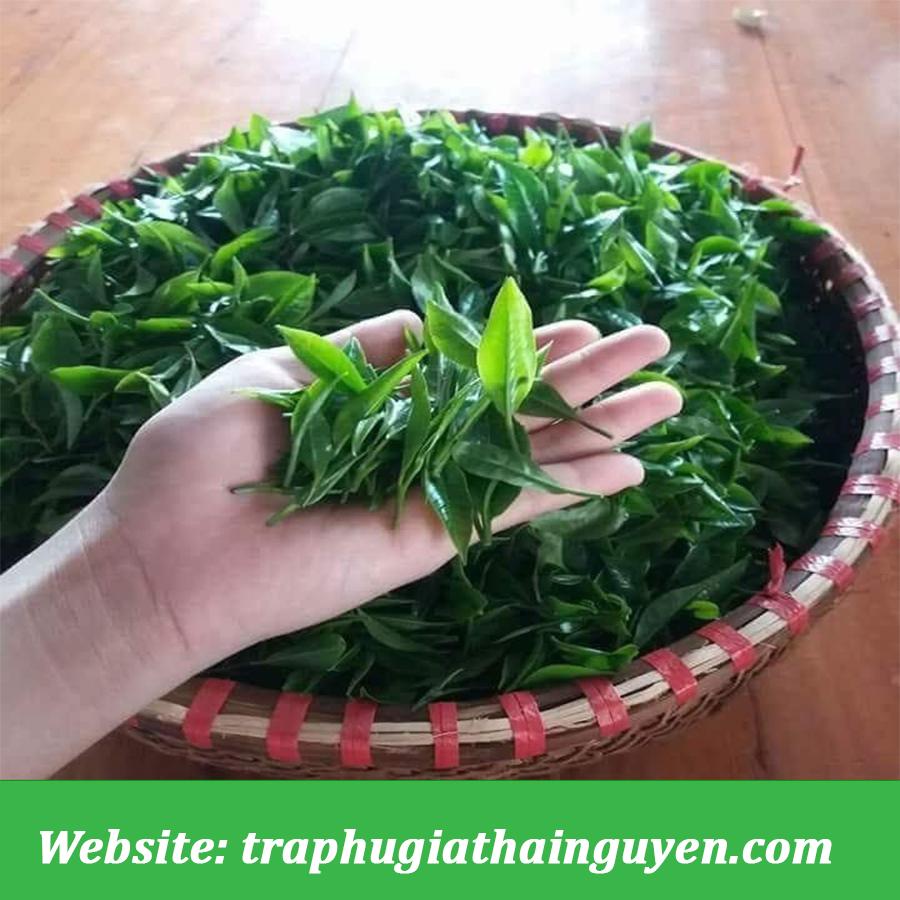 Búp Trà Thái Nguyên Phú Gia